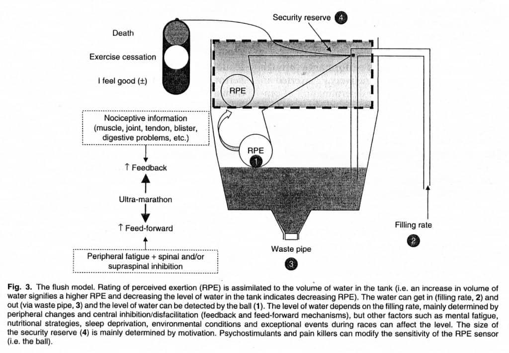 flush model fatigue